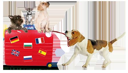 Valise chiens