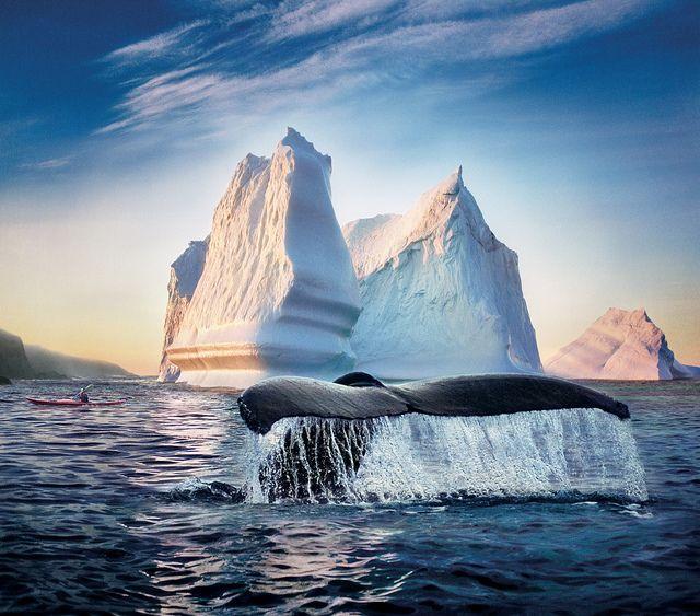 iceberg labrador